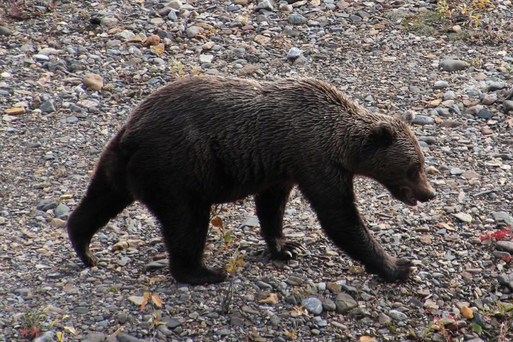 Alaska2013_20130901_205922_014